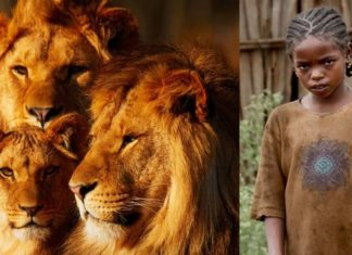 Lions and Girl