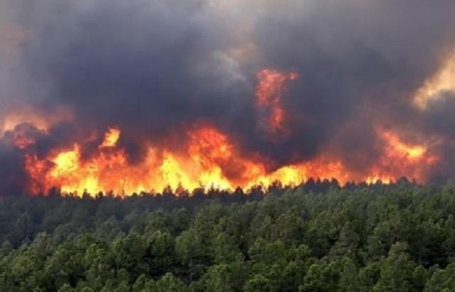 जंगल में आग